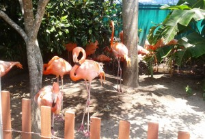 flamingos-no-seaworld2