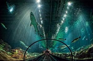 shark-encounter-seaworld-orlando