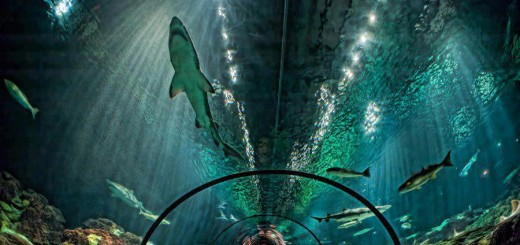 shark-encounter-seaworld-orlando