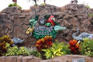 rainforest-orlando